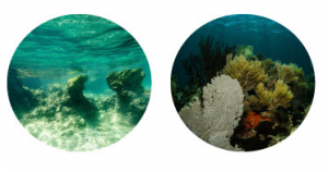 ミラクルレッグスムーサーの海藻成分-イメージ